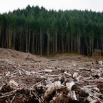 Албанија забрани да се сечат шумите во следните десет години