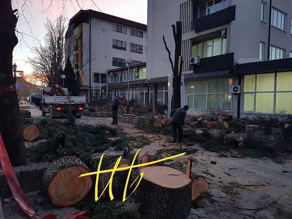 Сеча на дрвја 1/12/2016