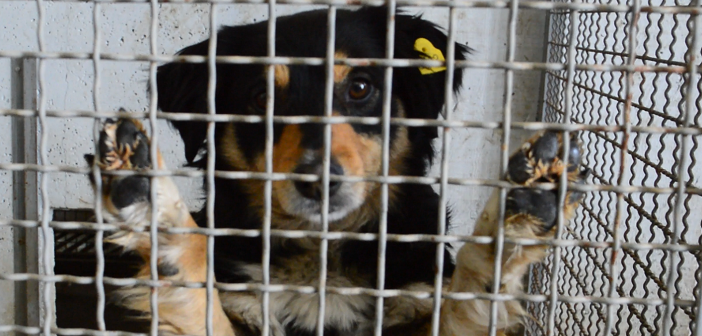 [Видео] Граѓани страдаат додека невладините и институциите се караат кој е крив за уличните кучиња