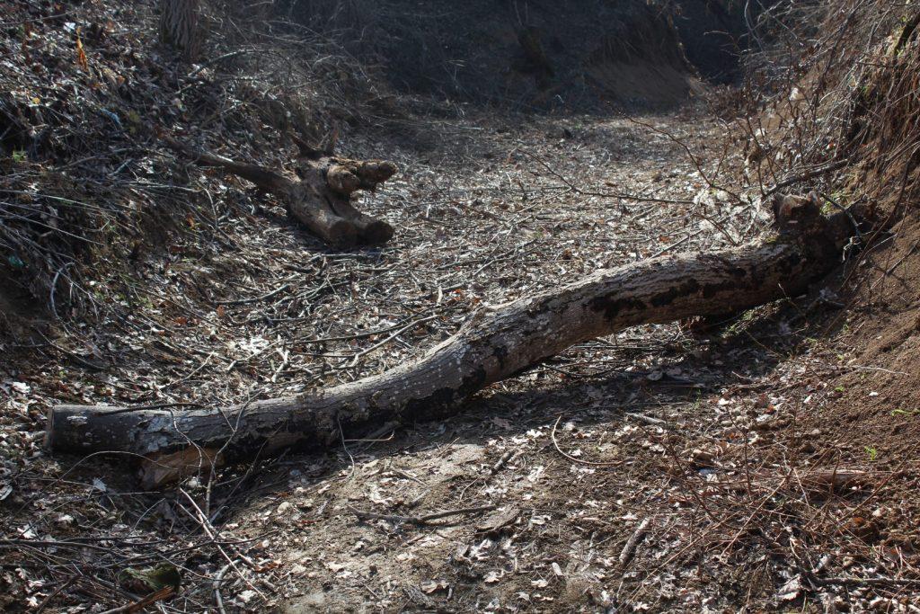 Исечени и откорнати дрвја по некогашниот дол