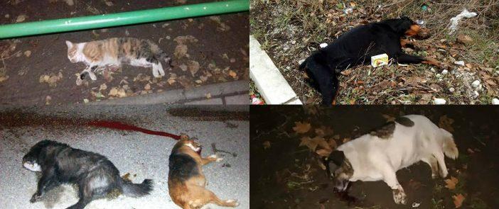 Усмртени животни низ Скопје, активисти и општински служби бараат да запре расфрлањето отрови