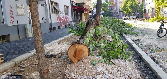 """Еко-активистите револтирани од масакрот на дрвја на улицата """"Орце Николов"""""""