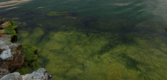 На Охридското Езеро ќе му требаат 1.000 години да се оправи од загадувањето